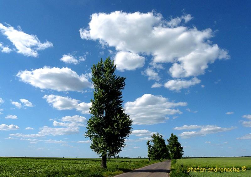 Drum prin campie