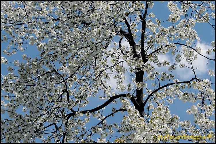 Exuberanta florala